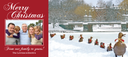 Holiday Cards - Ducklings in the Snow